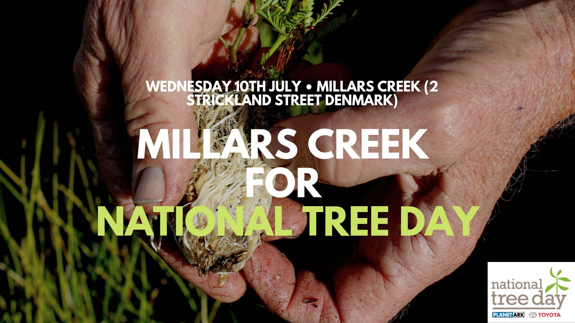 Image - Planting at Millars Creek for National Tree Day