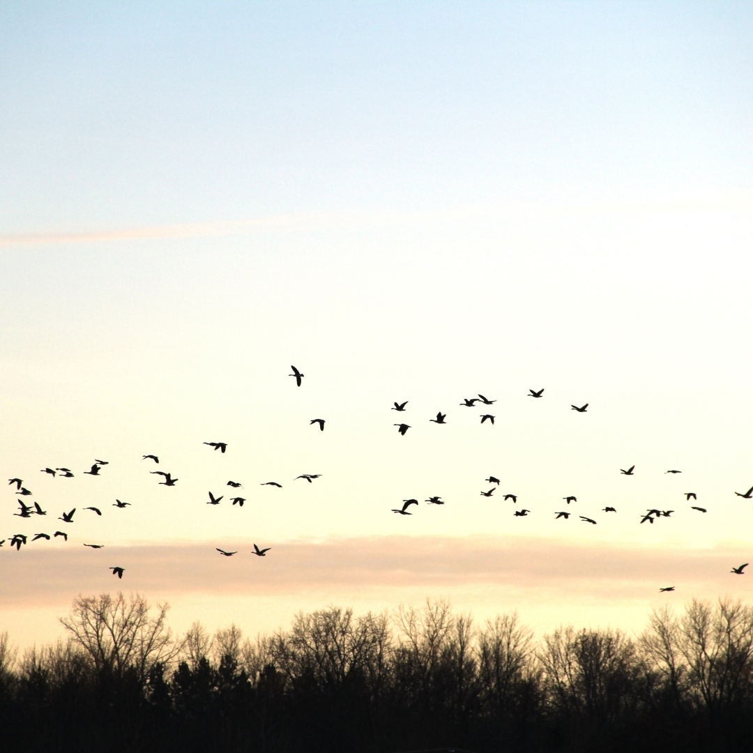 Bird Sanctuary raised as part of the Dog Areas Policy feedback process